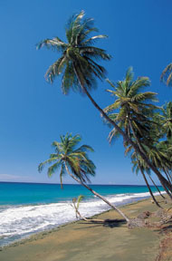 Hawaiian breeze reed diffuser oil