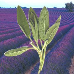 Lavender Sage Reed Diffuser Oil