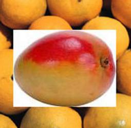 mango mandarin reed diffuser oil