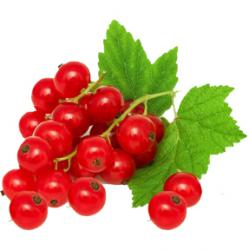 Red Currant Reed Diffuser Oil