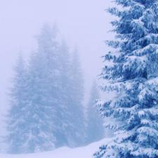 Douglas fir reed diffuser oul
