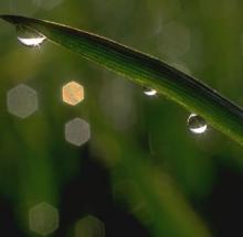 fresh cut grass reed diffuser oil