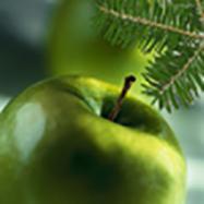 fresh evergreen apple