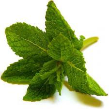 Peppermint Reed Diffuser Oil