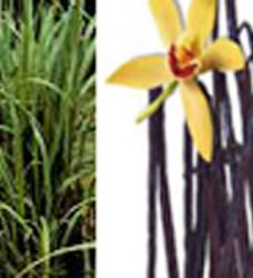 Vanilla Lemongrass Reed Diffuser Oil