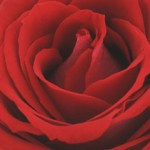 valentine scents