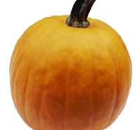 Pumpkin Spice Diffuser Oil